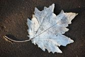 Ground , faded leaves — Stock Photo