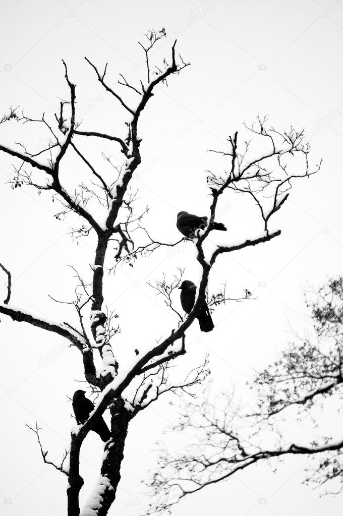 birds silhouette on bared tree branch  u2014 stock photo