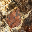 Stock Photo: Ground , faded leaves