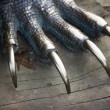 Metal dragon nails — Stock Photo