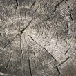 Spit wooden Stump — Stock Photo