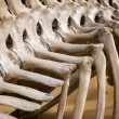 Stock Photo: Bone dinosaur
