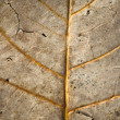 ������, ������: Faded leaf veins