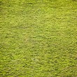 Green grass land — Stock Photo