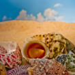 Stock Photo: Colourful seashells on beach