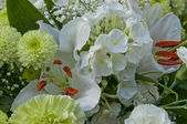 Bílé květy — Stock fotografie