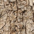 Tree bark as a background — Stock Photo