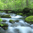 Water spring in forest — Stock Photo