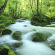 Stock Photo: Water spring in forest
