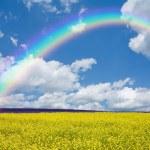 kolza tohumu alan ve gökkuşağı — Stok fotoğraf