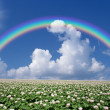 Potato field with sky and rainbow - Foto Stock