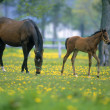 Mare and Colt on a ranch — Foto Stock