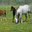 Mare and Colt on a ranch — Stock Photo