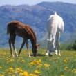 Mare and Colt on ranch — Stock Photo #8811703