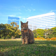 City park cat — Stock Photo