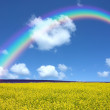 Rapeseed field and rainbow — Stock Photo #8835523