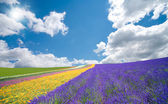 Flower field and blue sky with clouds. — Stock Photo