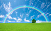 Green field with lone tree and rainbow — Stock Photo