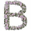 Alphabet flower Font, made from flower photo. - Stock Photo