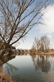 Stone bridge over river with leafless trees — Stock Photo
