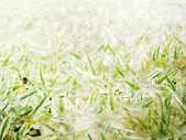 Freeze grass — Stock Photo