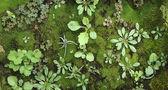 Micro world vegetable kingdom — Zdjęcie stockowe