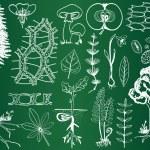 Biology plant sketches on school board - botany illustration — Stock Vector #10204615