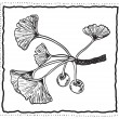 Ginkgo biloba hand-drawn branch with leaves — Vettoriali Stock