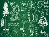Biologie rostlin náčrtky na školní tabuli - botanika ilustrace — Stock vektor