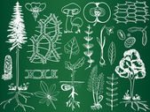 Biology plant sketches on school board - botany illustration — Cтоковый вектор