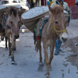 Working donkeys — Stock Photo #9401854