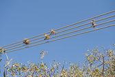 Monkeys on wire — Stock Photo