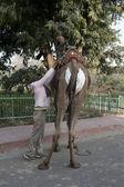 Camel's hunger — Foto de Stock