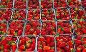 Fresh strawberry's on the market — Stock Photo