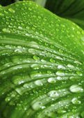 Morning drops on green leaves — Stock Photo