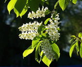 Flowering — Stock fotografie