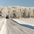 Forest Road in Winter Time - Stock Photo