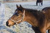 Foal in the Field — Stockfoto