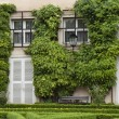 House With Ivy — Stock Photo