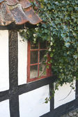 Ivy Branch at the Old Window — Stock Photo