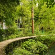 Wood path in forest — Stock Photo