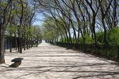Rustige loopbrug omringd door bloeiende bomen en struiken — Stockfoto