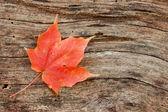 Wood grain curves around maple leaf — Stock Photo