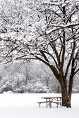 Snow gently falls on picnic bench in forest preserve — Stock Photo