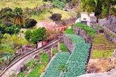 Farm in Cape verde island of Sao Antao — Stock Photo