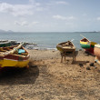Stock Photo: Fishing boats in Cape Verde