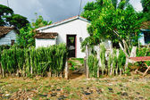 Typical house in the cuban countryside — Stock Photo