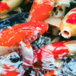 Koi carps in a pond - ストック写真