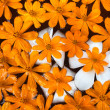 Orange flowers floating on water — Stock Photo