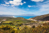 Olive fields near the Mediterranian cost on Crete — Stock Photo